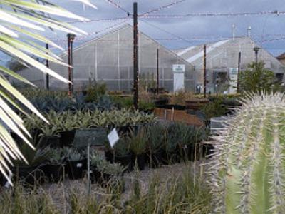 greenhouse300